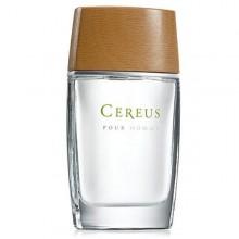 Cereus №4